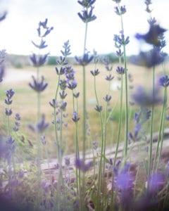 Sage Birth & Wellness Collective - Herbal Medicine